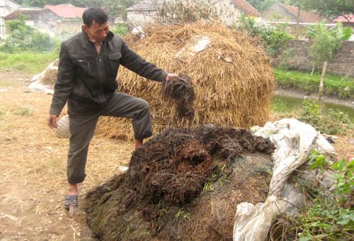 Phân hữu cơ trong sản xuất nông nghiệp bền vững