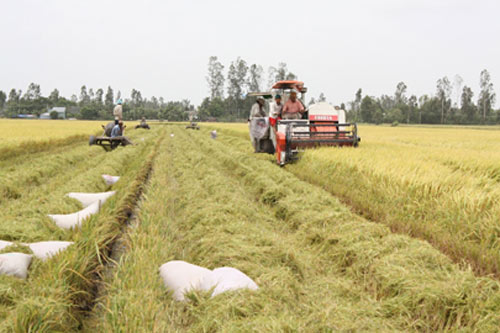 Tái cơ cấu nông nghiệp phải gắn liền với xây dựng NTM