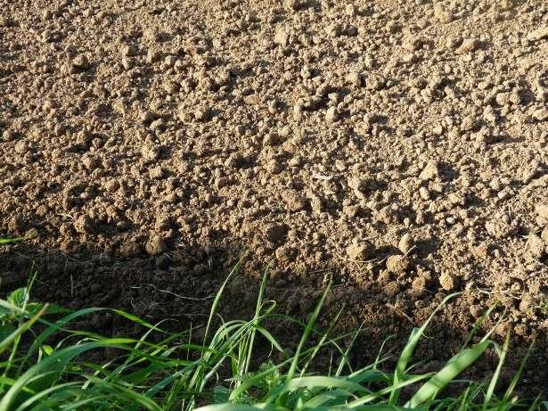 Đất có thể đóng vai trò quan trọng trong việc giảm lượng khí nhà kính