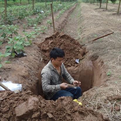 Dịch bệnh cây trồng, nguy cơ từ suy thoái đất