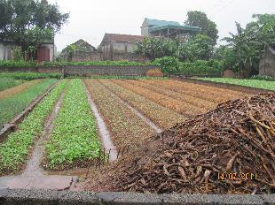 Xử lý phế thải nông nghiệp bằng Trichoderma