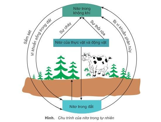 Nitơ trong đất làm sạch không khí
