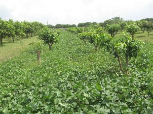 Cải tạo đất nông nghiệp bạc màu