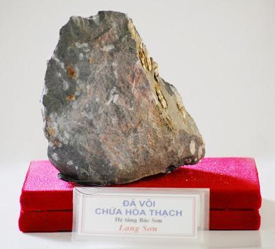 Đá vôi chứa hóa thạch, hệ tầng Bắc Sơn, Lạng Sơn