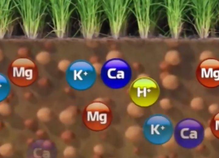 Sử dụng và biện pháp cải tạo đất nông nghiệp bạc màu ở nước ta
